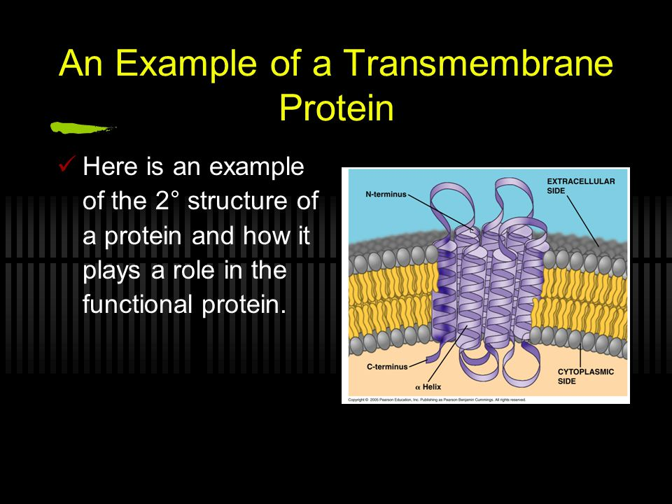 An Example of a Transmembrane Protein Here is an example of the 2° structure of a protein and how it plays a role in the functional protein.