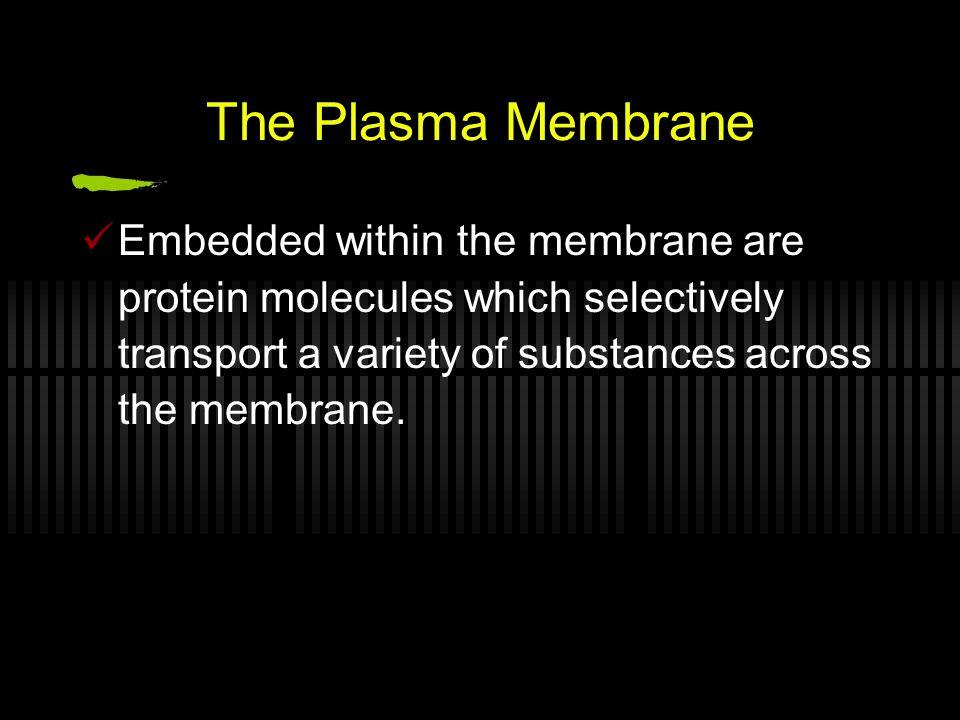 The Plasma Membrane Embedded within the membrane are protein molecules which selectively transport a variety of substances across the membrane.