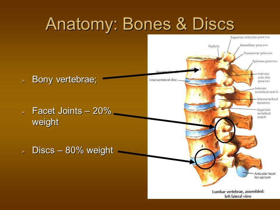 Anatomy: Bones & Discs  Bony vertebrae;  Facet Joints – 20% weight  Discs – 80% weight