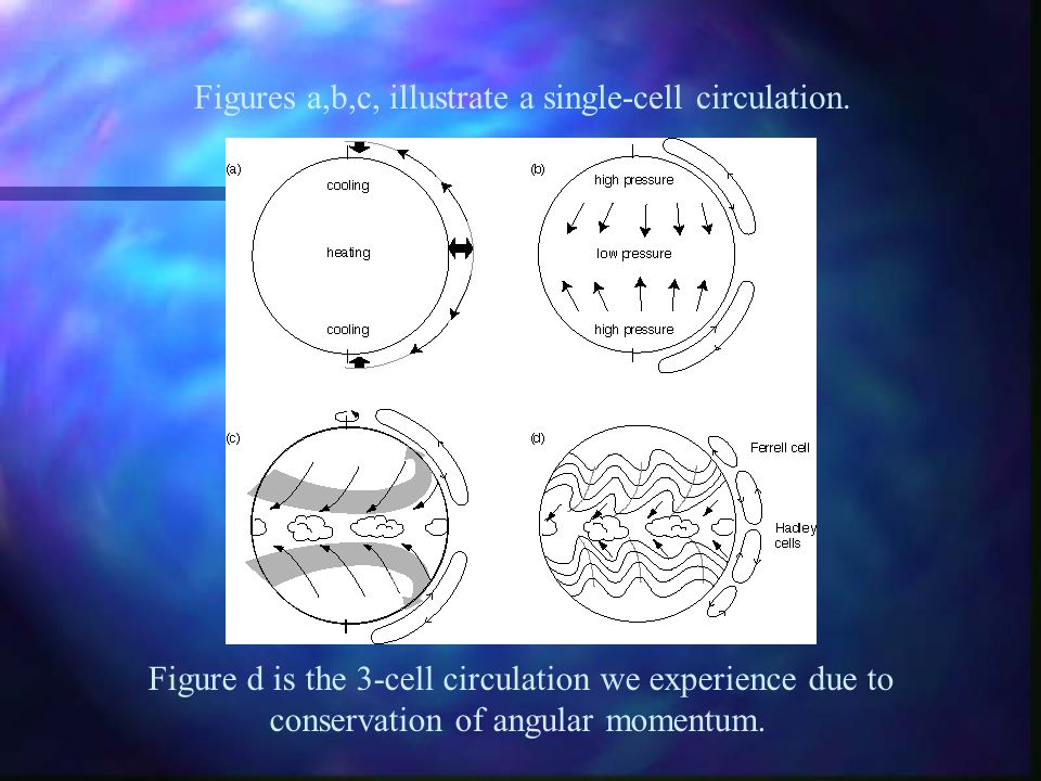 Figures a,b,c, illustrate a single-cell circulation.