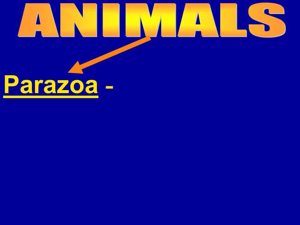 Parazoa -