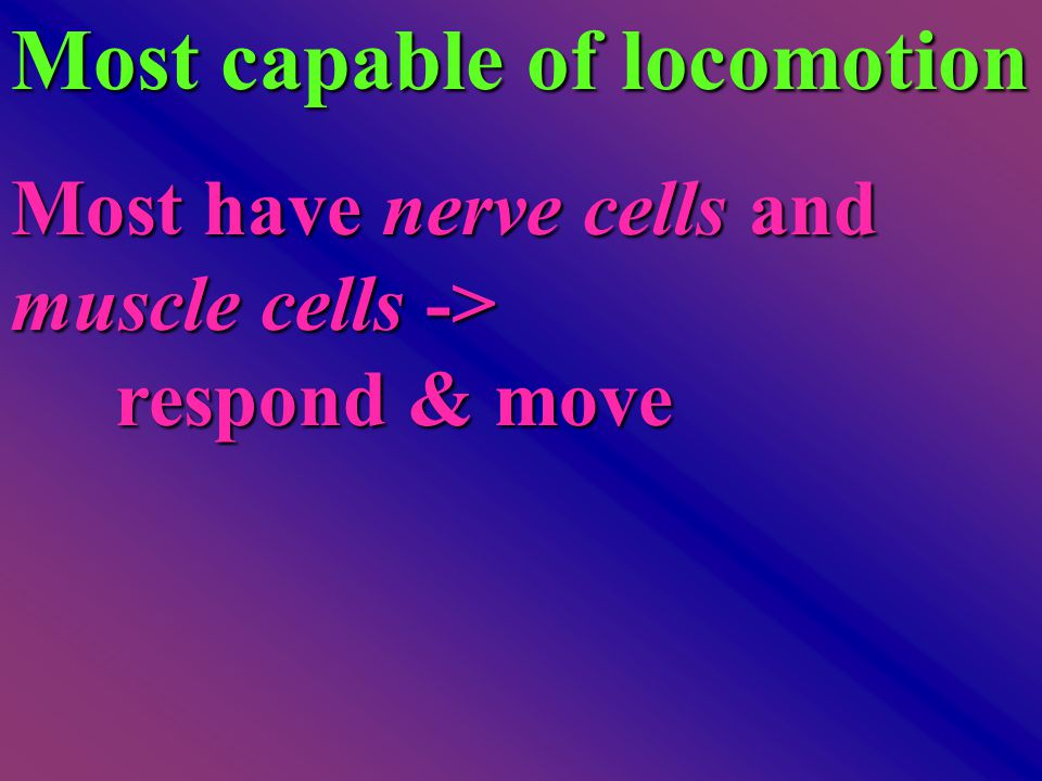 Most capable of locomotion Most have nerve cells and muscle cells -> respond & move