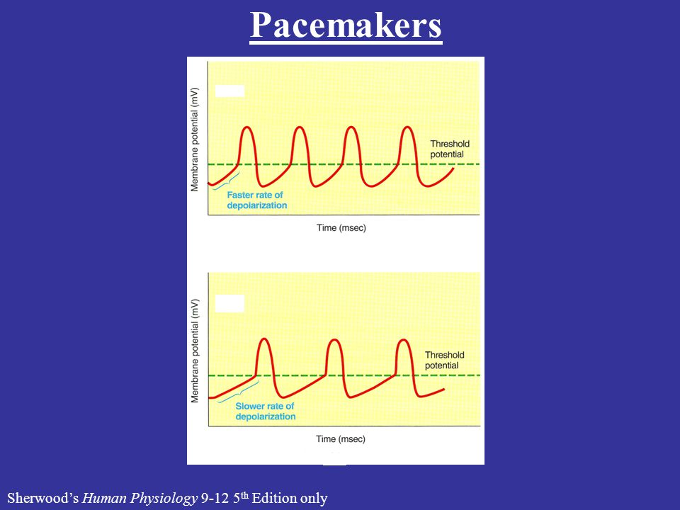 Pacemakers Sherwood's Human Physiology 9-12 5 th Edition only