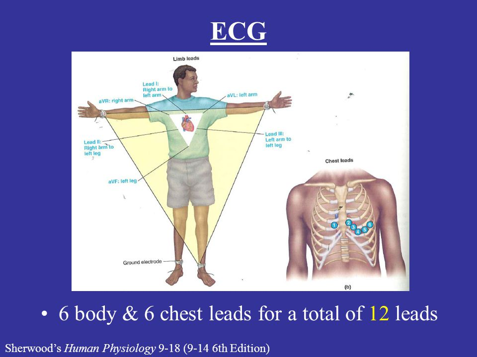 ECG 6 body & 6 chest leads for a total of 12 leads Sherwood's Human Physiology 9-18 (9-14 6th Edition)