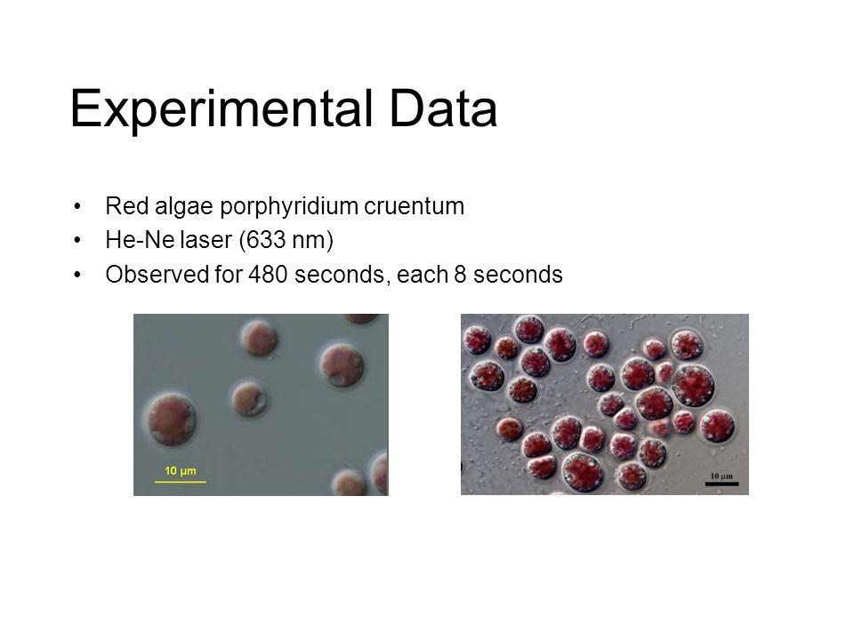 Experimental Data Red algae porphyridium cruentum He-Ne laser (633 nm) Observed for 480 seconds, each 8 seconds