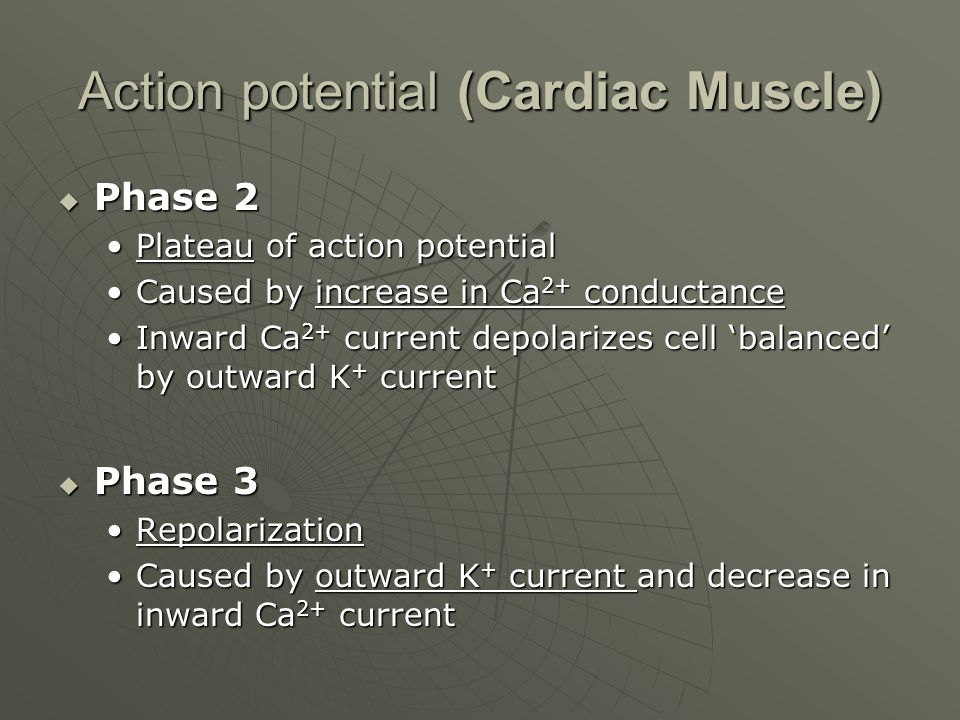 Action potential (Cardiac Muscle)  Phase 2 Plateau of action potentialPlateau of action potential Caused by increase in Ca 2+ conductanceCaused by in