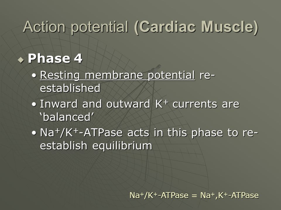 Action potential (Cardiac Muscle)  Phase 4 Resting membrane potential re- establishedResting membrane potential re- established Inward and outward K + currents are 'balanced'Inward and outward K + currents are 'balanced' Na + /K + -ATPase acts in this phase to re- establish equilibriumNa + /K + -ATPase acts in this phase to re- establish equilibrium Na + /K + -ATPaseNa +,K + -ATPase Na + /K + -ATPase = Na +,K + -ATPase