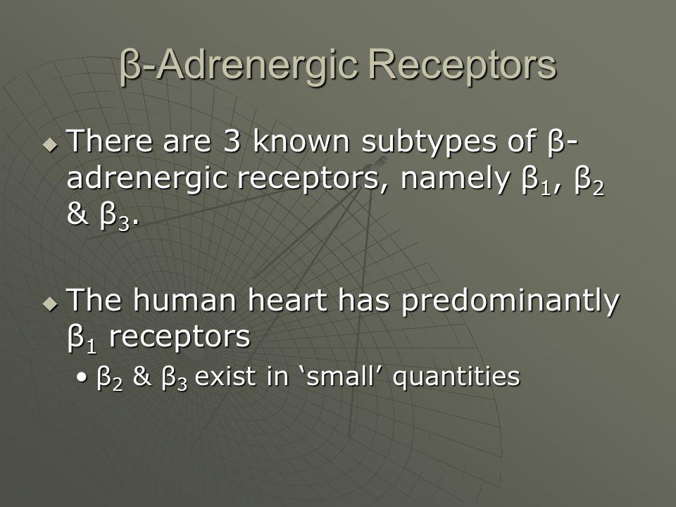 β-Adrenergic Receptors  There are 3 known subtypes of β- adrenergic receptors, namely β 1, β 2 & β 3.  The human heart has predominantly β 1 recepto