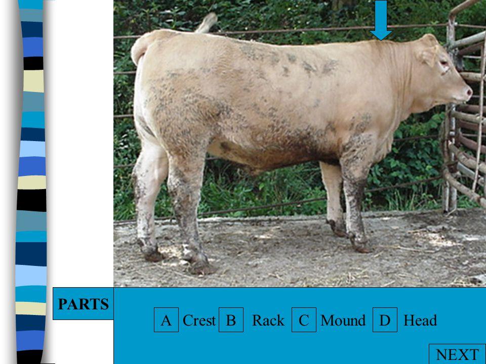 A. Horns B. Poll C. Eye D. Dewlap DACB PARTS NEXT