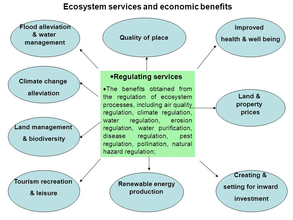  Regulating services  The benefits obtained from the regulation of ecosystem processes, including air quality regulation, climate regulation, water