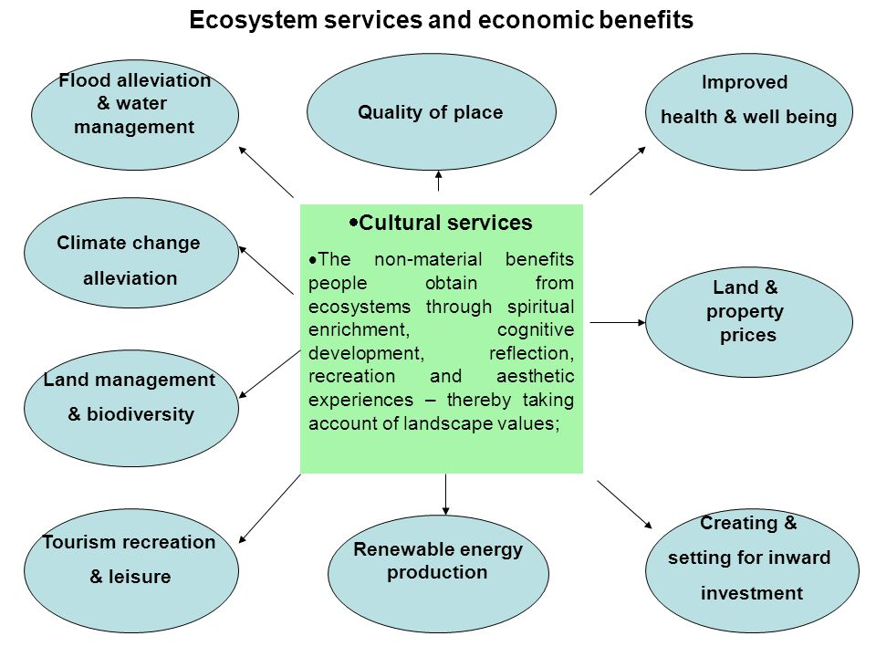  Cultural services  The non-material benefits people obtain from ecosystems through spiritual enrichment, cognitive development, reflection, recreat