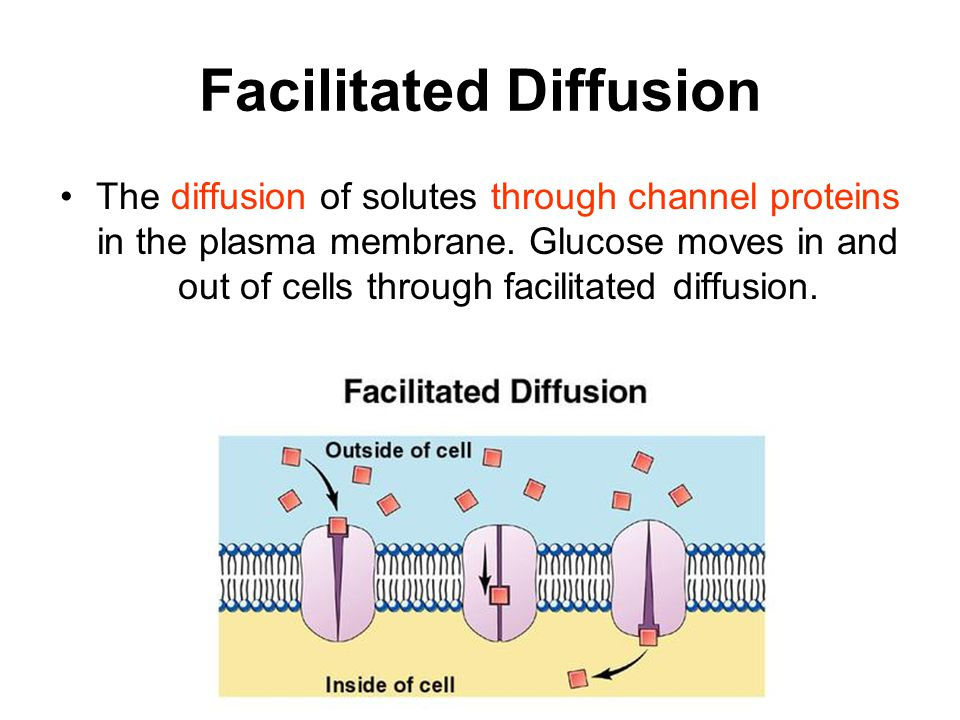 Facilitated Diffusion The diffusion of solutes through channel proteins in the plasma membrane.