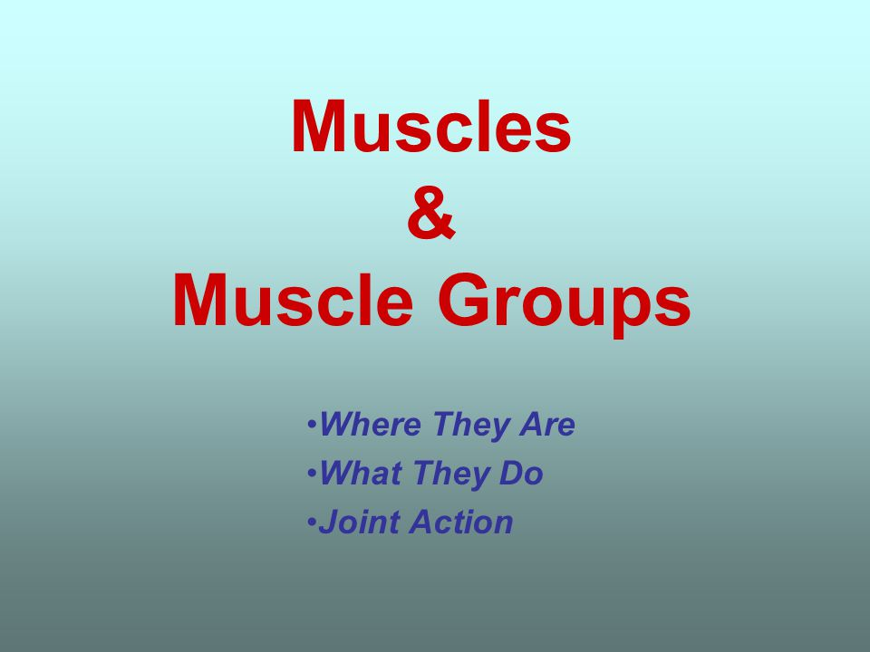 Muscles & Muscle Groups Where They Are What They Do Joint Action