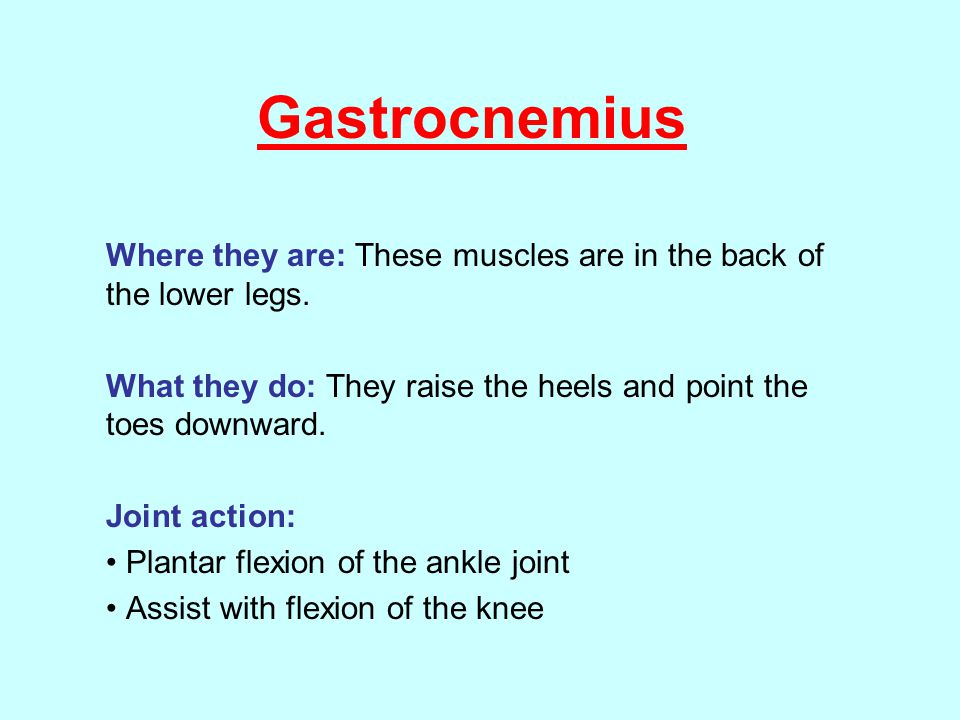 Gastrocnemius Where they are: These muscles are in the back of the lower legs.
