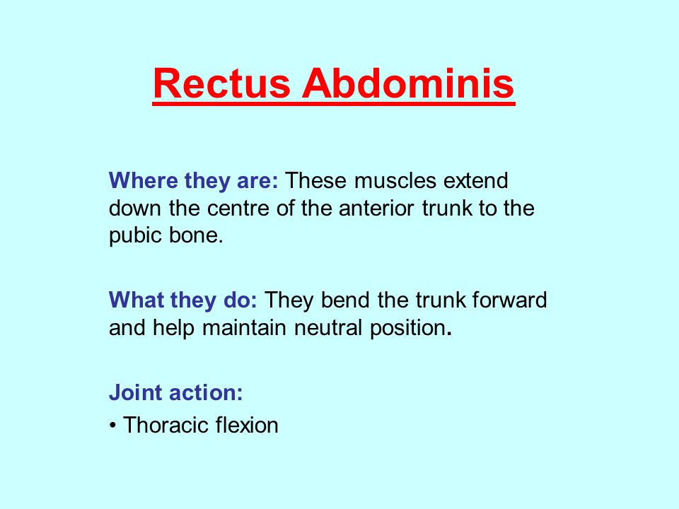 Rectus Abdominis Where they are: These muscles extend down the centre of the anterior trunk to the pubic bone.
