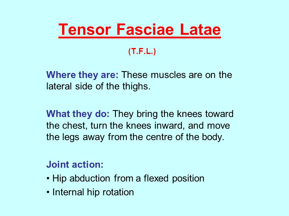 Tensor Fasciae Latae Tensor Fasciae Latae (T.F.L.) Where they are: These muscles are on the lateral side of the thighs.