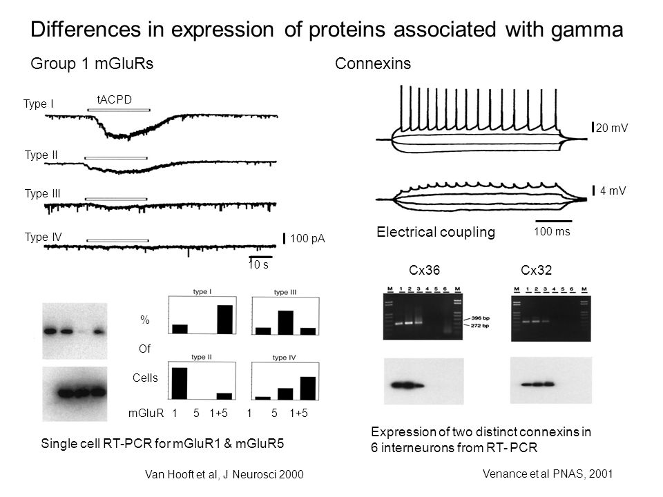 Differences in expression of proteins associated with gamma Group 1 mGluRsConnexins Cx36 Cx32 Expression of two distinct connexins in 6 interneurons from RT- PCR Venance et al PNAS, 2001 20 mV 4 mV 100 ms Electrical coupling 10 s 100 pA tACPD Type I Type II Type III Type IV Single cell RT-PCR for mGluR1 & mGluR5 % Of Cells mGluR 1 5 1+5 1 5 1+5 Van Hooft et al, J Neurosci 2000