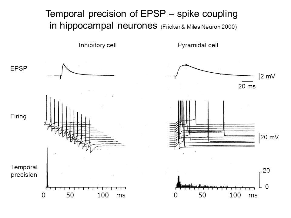Temporal precision of EPSP – spike coupling in hippocampal neurones (Fricker & Miles Neuron 2000) Inhibitory cellPyramidal cell EPSP Firing Temporal precision 2 mV 20 ms 20 mV 20 0 0 50 100 ms