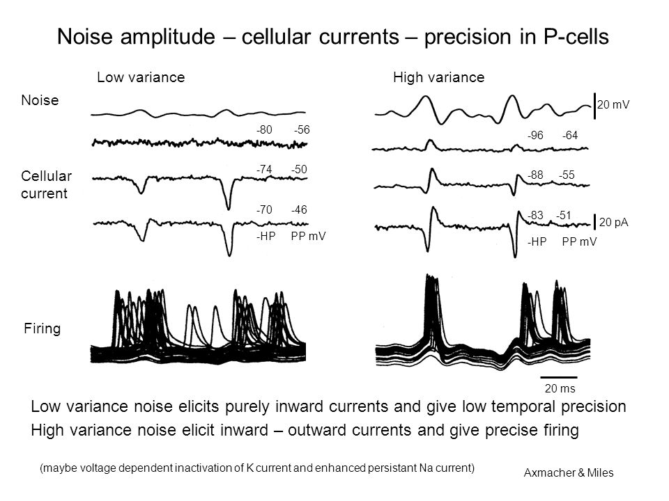 Noise amplitude – cellular currents – precision in P-cells Noise Low variance High variance 20 mV 20 pA Cellular current Firing -80 -56 -74 -50 -70 -46 -HP PP mV -96 -64 -88 -55 -83 -51 -HP PP mV 20 ms Low variance noise elicits purely inward currents and give low temporal precision High variance noise elicit inward – outward currents and give precise firing (maybe voltage dependent inactivation of K current and enhanced persistant Na current) Axmacher & Miles
