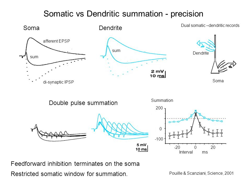 Somatic vs Dendritic summation - precision Pouille & Scanziani, Science, 2001 Dual somatic –dendritic records Dendrite Soma afferent EPSP sum di-synaptic IPSP sum Soma Dendrite Double pulse summation Summation 200 0 -100 -20 0 20 Interval ms Feedforward inhibition terminates on the soma Restricted somatic window for summation.