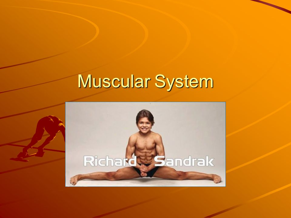 7 ways Muscles are named 4.Fiber Direction- example: obliques 5.