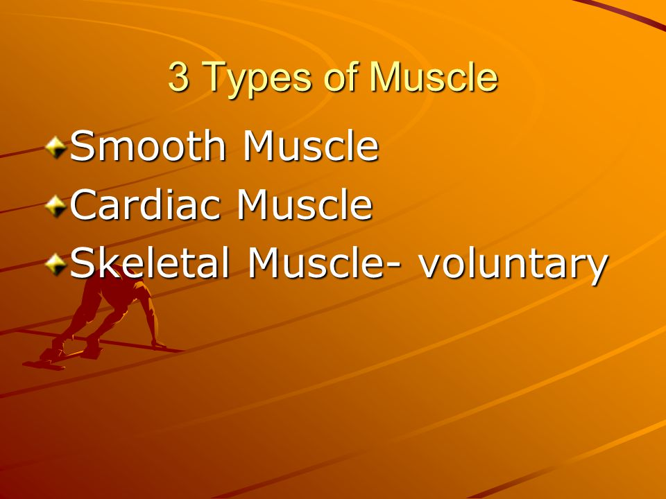 3 Types of Muscle Smooth Muscle Cardiac Muscle Skeletal Muscle- voluntary