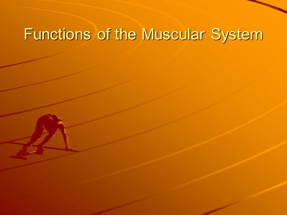 Antagonistic relationship Skeletal muscles work in pairs.