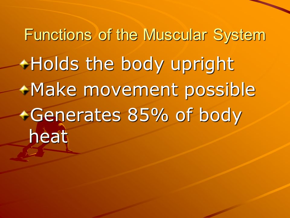 Functions of the Muscular System Holds the body upright Make movement possible Generates 85% of body heat Moves food, blood and fluids through the body
