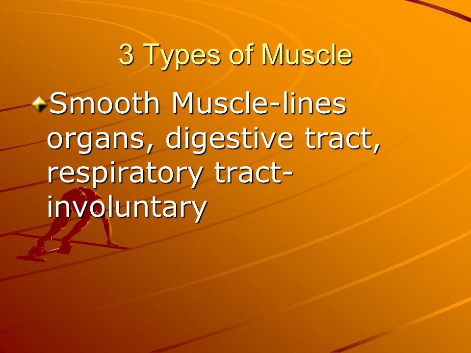 Smooth Muscle-lines organs, digestive tract, respiratory tract- involuntary
