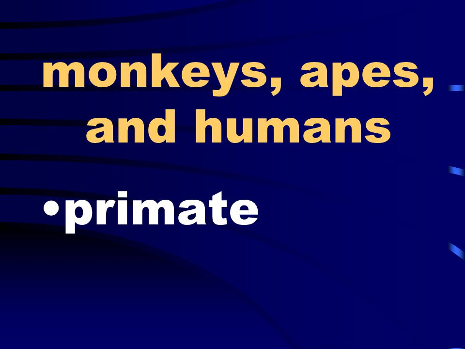 monkeys, apes, and humans primate
