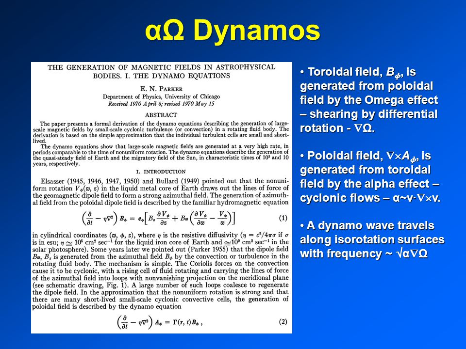 αΩ Dynamos Toroidal field, B ɸ, is generated from poloidal field by the Omega effect – shearing by differential rotation -  Ω.