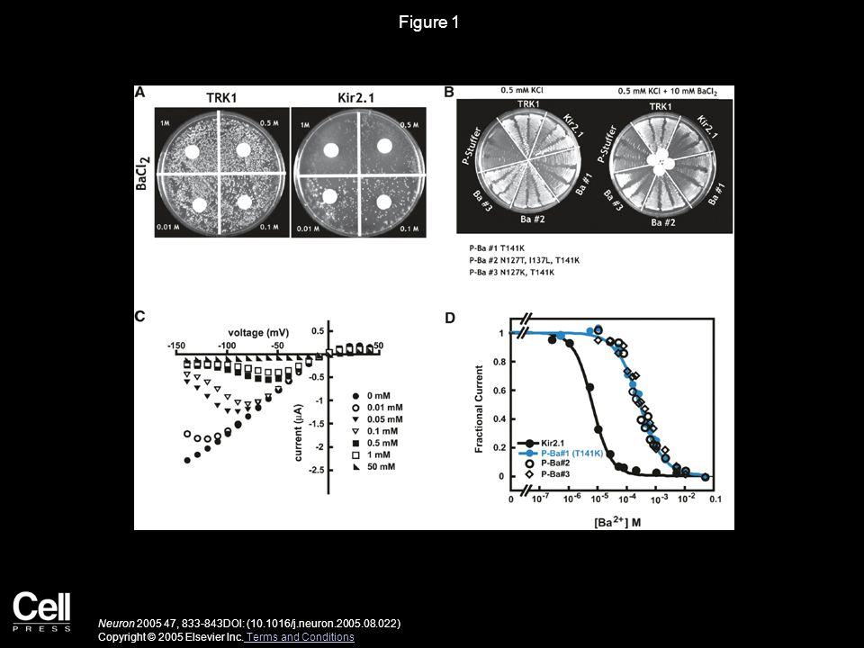 Figure 1 Neuron 2005 47, 833-843DOI: (10.1016/j.neuron.2005.08.022) Copyright © 2005 Elsevier Inc.