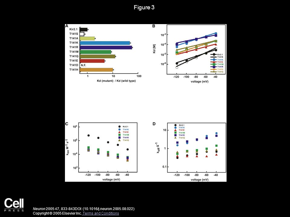 Figure 3 Neuron 2005 47, 833-843DOI: (10.1016/j.neuron.2005.08.022) Copyright © 2005 Elsevier Inc.