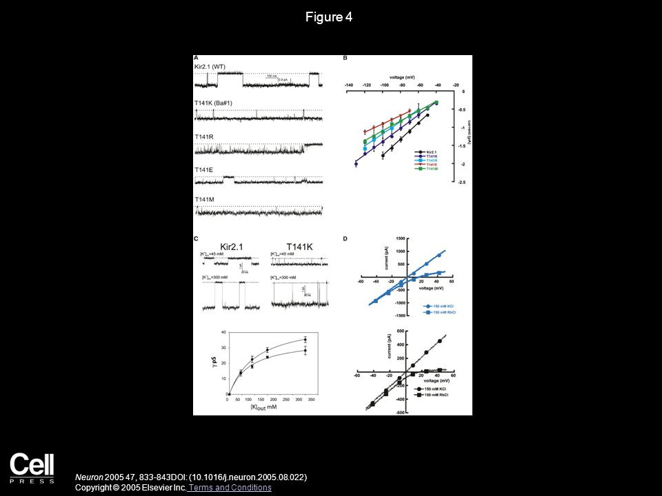 Figure 4 Neuron 2005 47, 833-843DOI: (10.1016/j.neuron.2005.08.022) Copyright © 2005 Elsevier Inc.