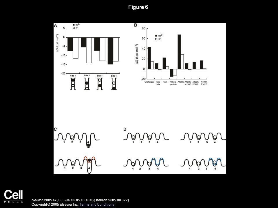 Figure 6 Neuron 2005 47, 833-843DOI: (10.1016/j.neuron.2005.08.022) Copyright © 2005 Elsevier Inc.