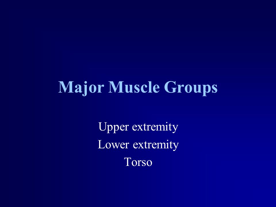 Major Muscle Groups Upper extremity Lower extremity Torso