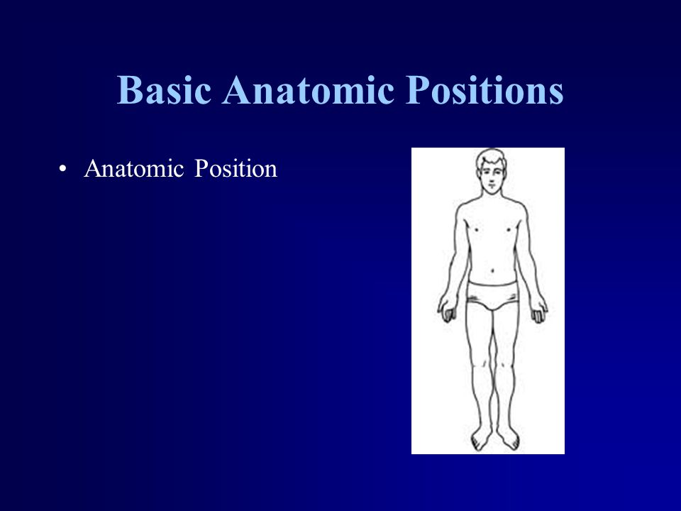 Basic Anatomic Positions Anatomic Position