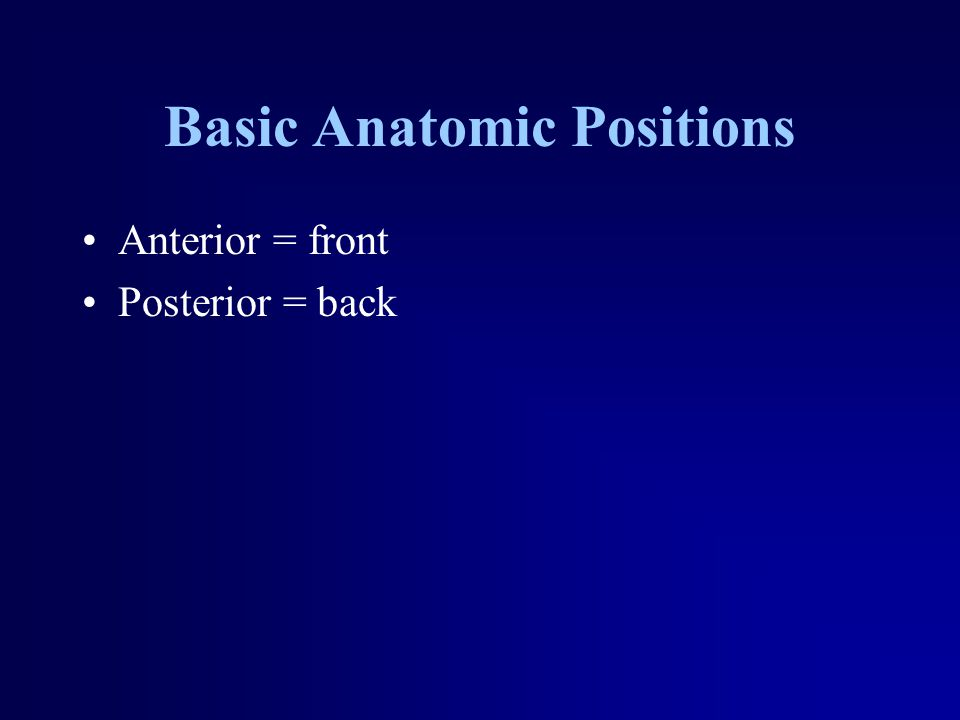 Basic Anatomic Positions Anterior = front Posterior = back