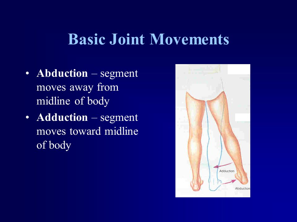 Basic Joint Movements Abduction – segment moves away from midline of body Adduction – segment moves toward midline of body