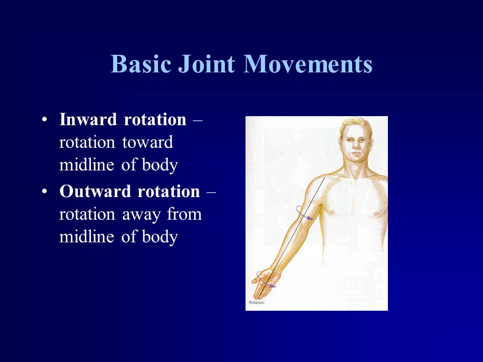 Basic Joint Movements Inward rotation – rotation toward midline of body Outward rotation – rotation away from midline of body