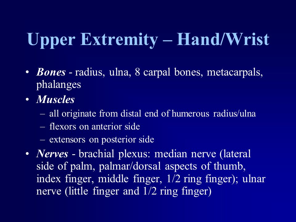 Upper Extremity – Hand/Wrist Bones - radius, ulna, 8 carpal bones, metacarpals, phalanges Muscles –all originate from distal end of humerous radius/ulna –flexors on anterior side –extensors on posterior side Nerves - brachial plexus: median nerve (lateral side of palm, palmar/dorsal aspects of thumb, index finger, middle finger, 1/2 ring finger); ulnar nerve (little finger and 1/2 ring finger)