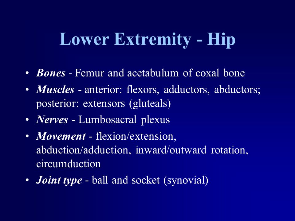 Lower Extremity - Hip Bones - Femur and acetabulum of coxal bone Muscles - anterior: flexors, adductors, abductors; posterior: extensors (gluteals) Nerves - Lumbosacral plexus Movement - flexion/extension, abduction/adduction, inward/outward rotation, circumduction Joint type - ball and socket (synovial)
