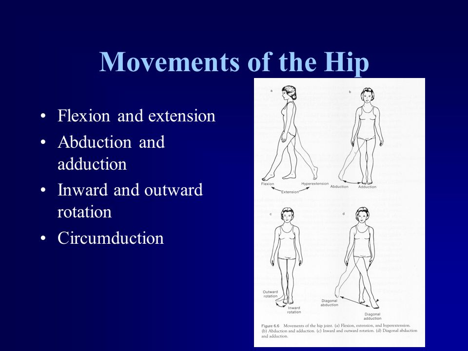 Movements of the Hip Flexion and extension Abduction and adduction Inward and outward rotation Circumduction