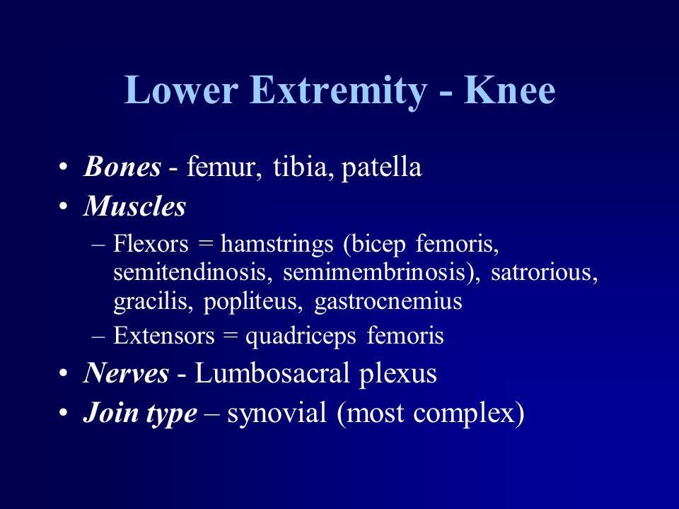 Lower Extremity - Knee Bones - femur, tibia, patella Muscles –Flexors = hamstrings (bicep femoris, semitendinosis, semimembrinosis), satrorious, gracilis, popliteus, gastrocnemius –Extensors = quadriceps femoris Nerves - Lumbosacral plexus Join type – synovial (most complex)