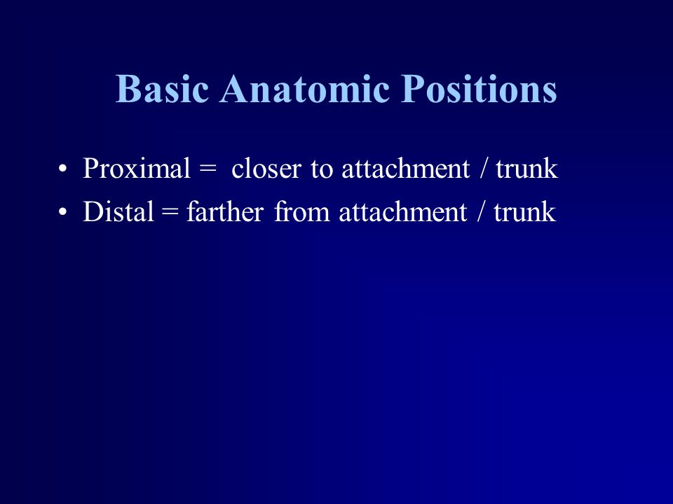 Basic Anatomic Positions Proximal = closer to attachment / trunk Distal = farther from attachment / trunk