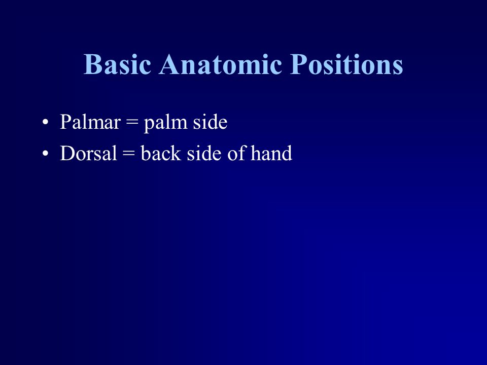 Basic Anatomic Positions Palmar = palm side Dorsal = back side of hand