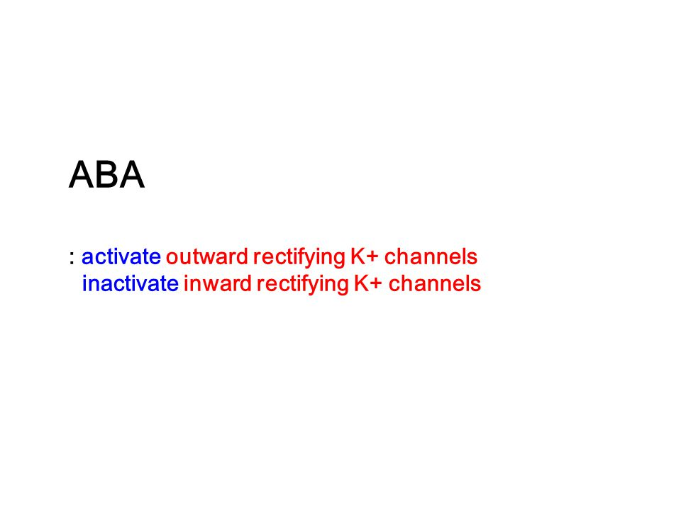 ABA : activate outward rectifying K+ channels inactivate inward rectifying K+ channels