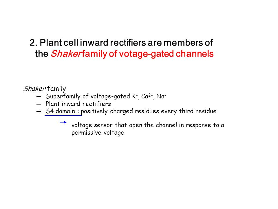 2. Plant cell inward rectifiers are members of the Shaker family of votage-gated channels Shaker family ─ Superfamily of voltage-gated K +, Ca 2+, Na