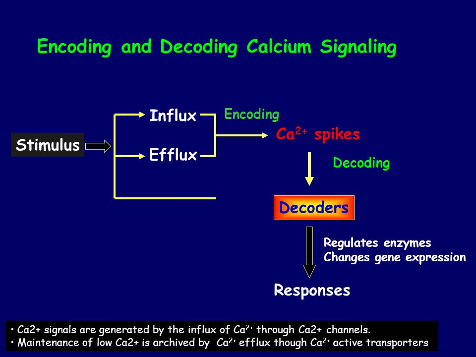 Encoding and Decoding Calcium Signaling Stimulus Influx Efflux Ca 2+ spikes Decoders Responses Regulates enzymes Changes gene expression Ca2+ signals