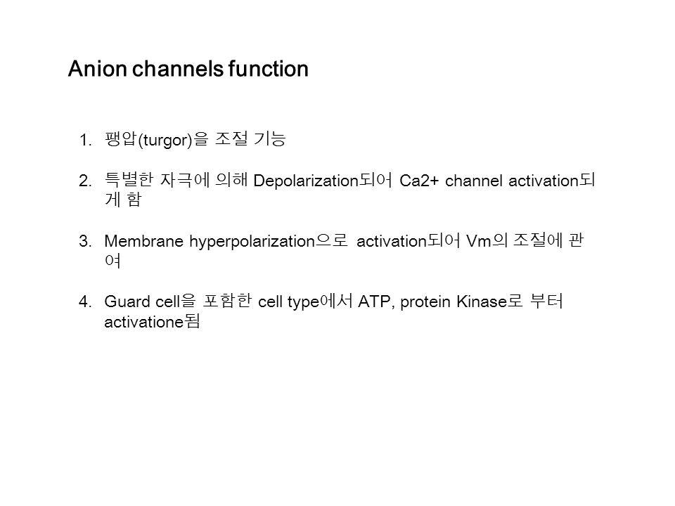 Anion channels function 1.팽압 (turgor) 을 조절 기능 2.